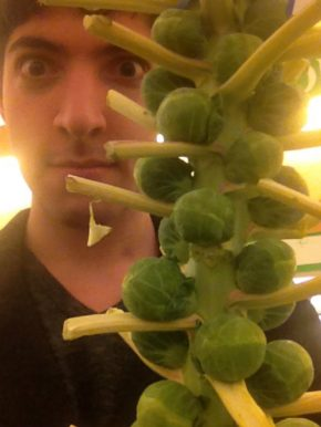 I Grew a Haiku From Brussels Sprouts