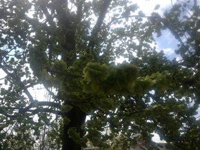 I Found a Cabbage Tree