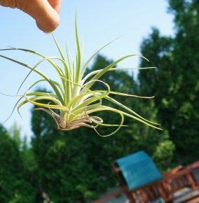 Will Airplants Be the Next Big Trend?