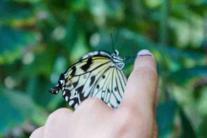 Holding_Butterfly